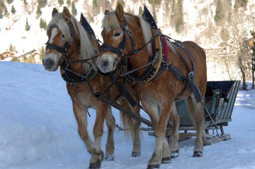 due cavalli che trainano una slitta sulla neve